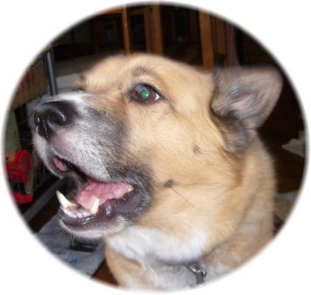 耳を下げて、帰宅した私を歓迎してくれているハルの嬉しそうな顔の写真