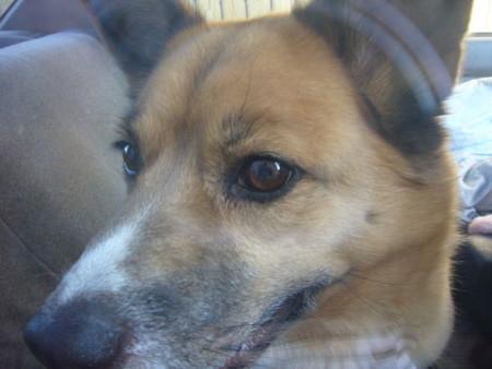 車に乗り込んで窓ガラスにくっついたハルのわくわくした顔の写真