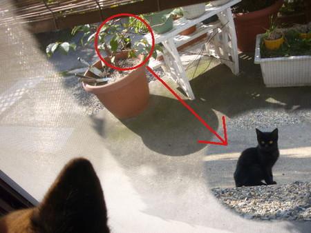 ハルの居る部屋の前の庭に座っているニャンコの写真
