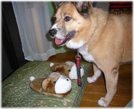 茶色い犬の形のスリッパの写真