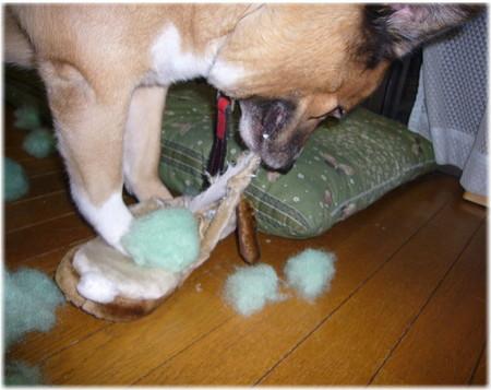 ふかふかのスリッパの綿を出しちゃってボロボロにした写真