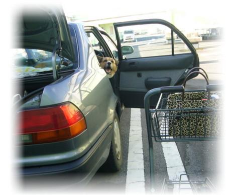 買い物先で、車の開いたドアから顔を出して荷物を乗せているお姉ちゃんを見ているハルの写真