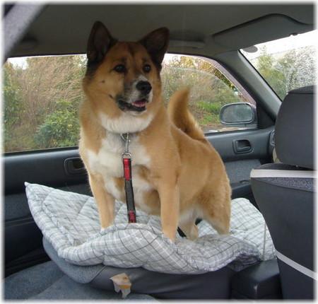 次はどこ行けるかと期待いっぱいのハルの車の中の写真