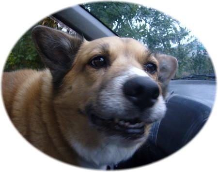車の中で嬉しそうなにんまりとしたハルの顔の写真