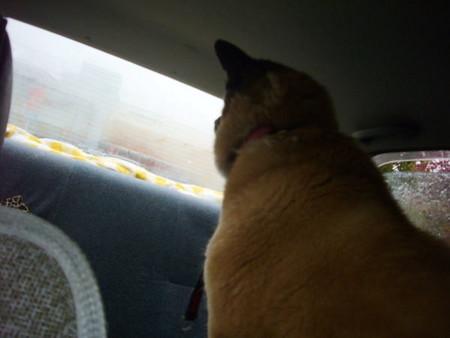 ハルの吐息で曇った車内から見たキリオの写真