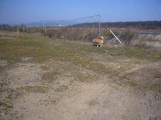 河原を散策するハルの写真