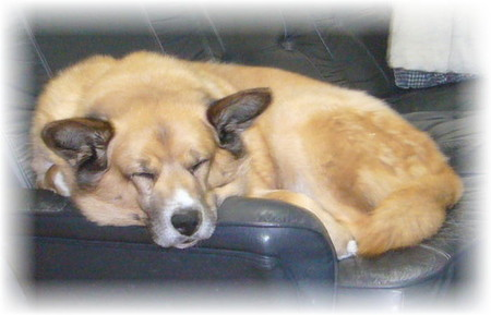 ソファーの上で丸まって寝ているハルの写真