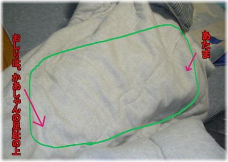 すっぽりと布団の中におさまって、それでもブルブル震えているハルの写真