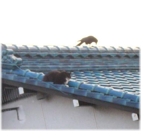 屋根の上でニャンコ父とカラスが睨み合っている写真