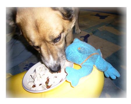 ご飯のお皿のカエルにもめげずに自分のご飯を食べているハルの写真