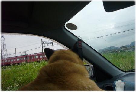 走ってくる電車を大騒ぎで見ているハルの写真