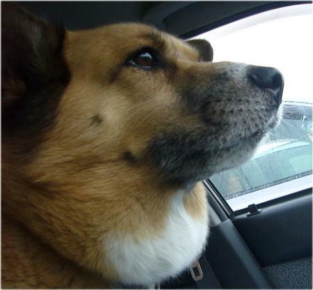 車の中のハルの顔の写真