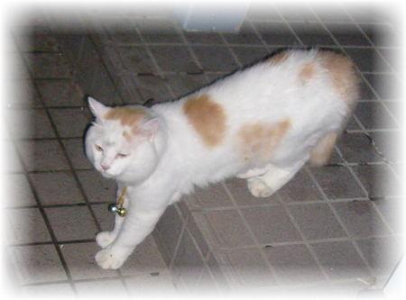 玄関のポーチにいるどこかの飼い猫