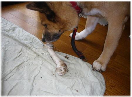地面の中から掘り出してきた泥だらけの骨ガムの写真