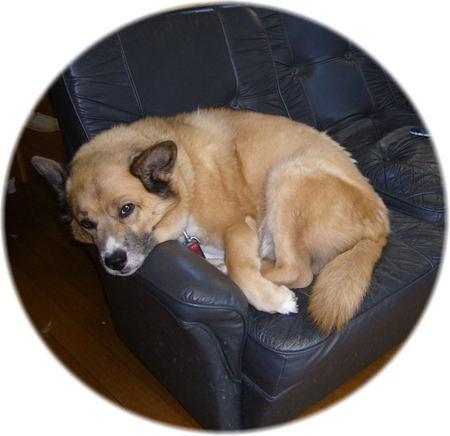 ソファーの肘掛に顎を乗せて退屈そうに私を見ているハルの写真