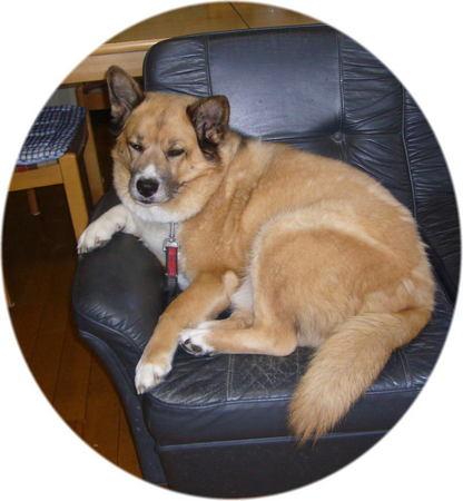 ソファーに座ったままで退屈で退屈でとでもいいたげなハルの写真