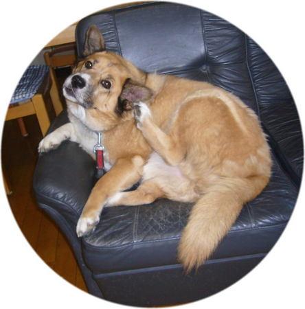 ソファーの上で退屈さをアピールするかのようなハルの写真