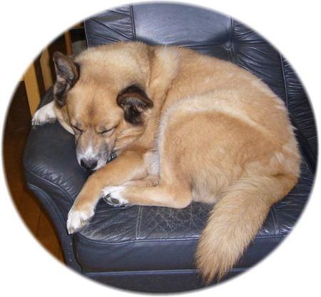 ソファーの上でいつのまにか寝てしまったハルの写真