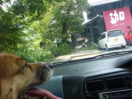 車の中からお店を見ているハルの恨めしそうな顔の写真