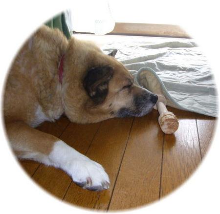 同じく、木の玩具を鼻先において寝ているハルの横からの写真