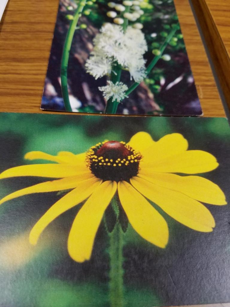f:id:halulu-jasmine:20161023104935j:plain