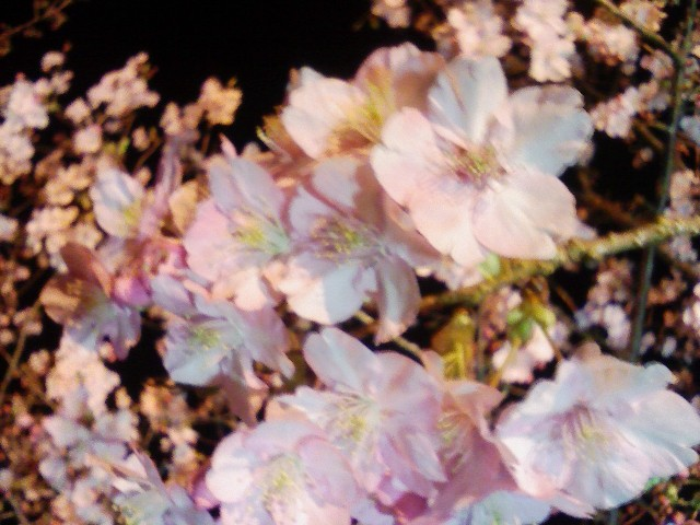 f:id:haluzak:20090211195839j:image