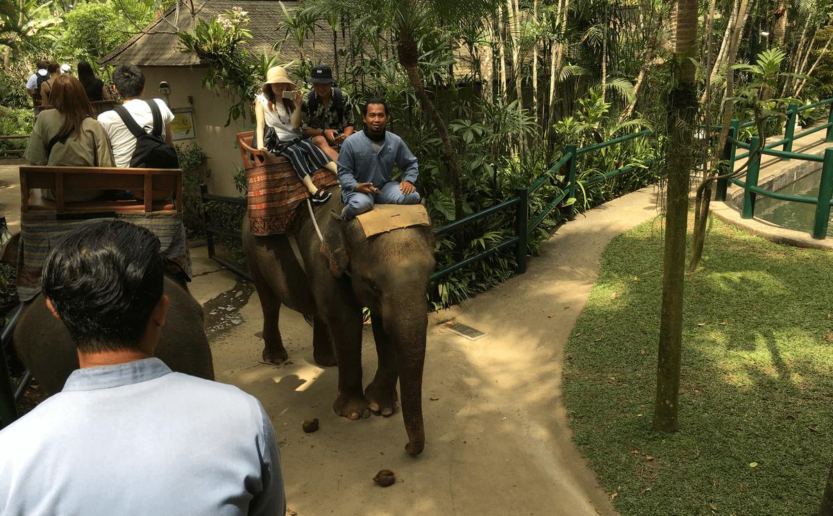 ゾウに乗りながら写真撮影する様子