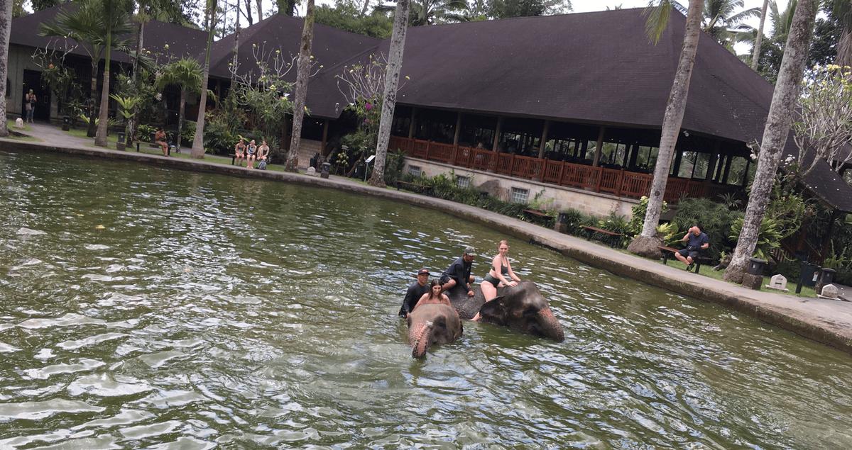ゾウに乗って水浴び