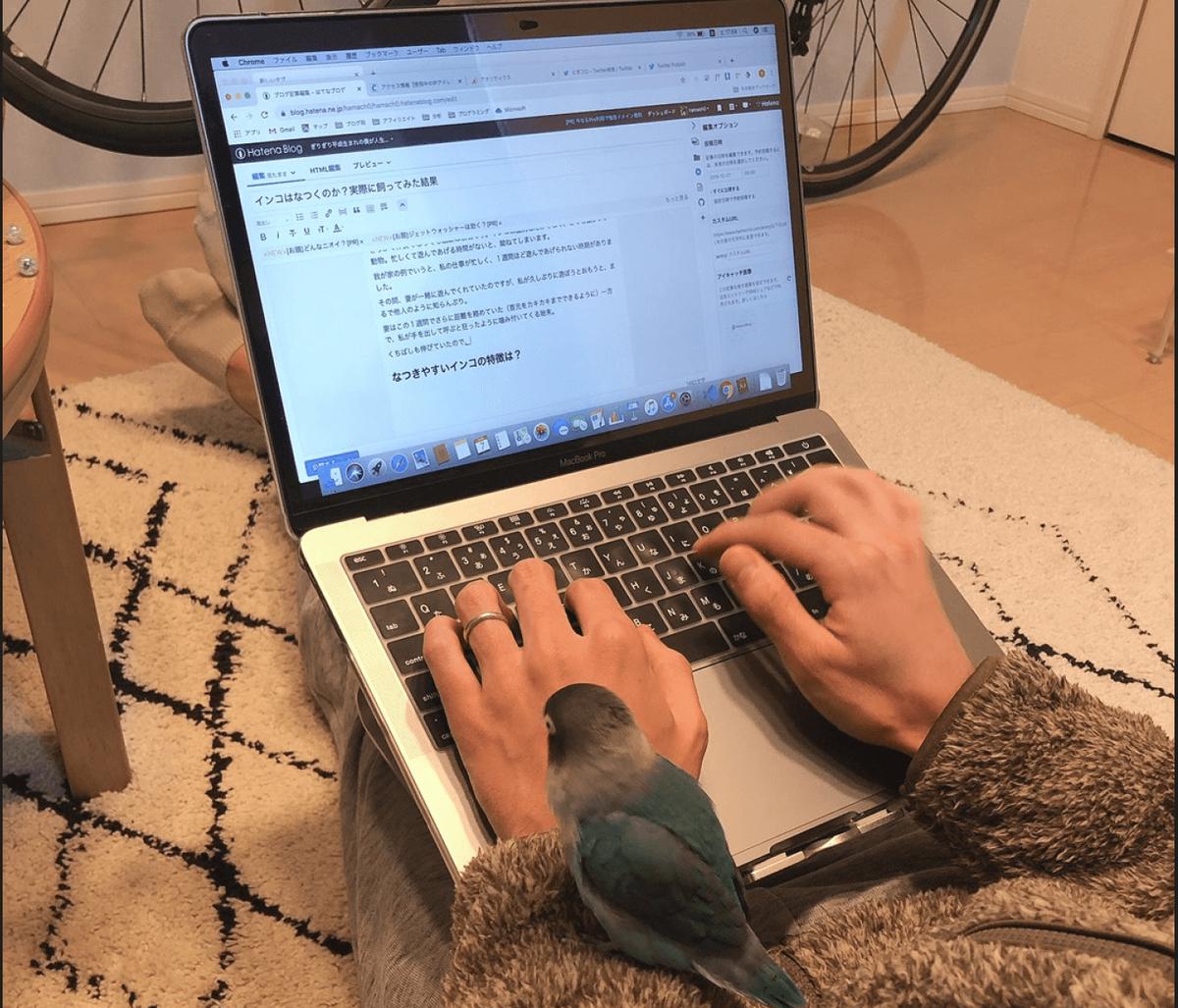なついたインコと一緒にブログを書く