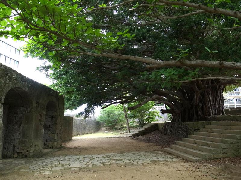 崇元寺の石門とガジュマル