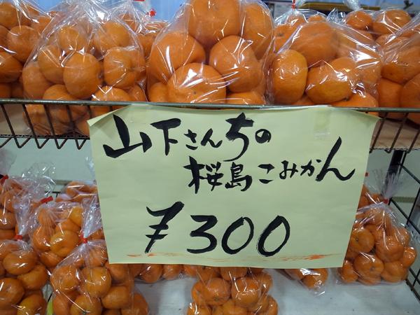 桜島こみかん