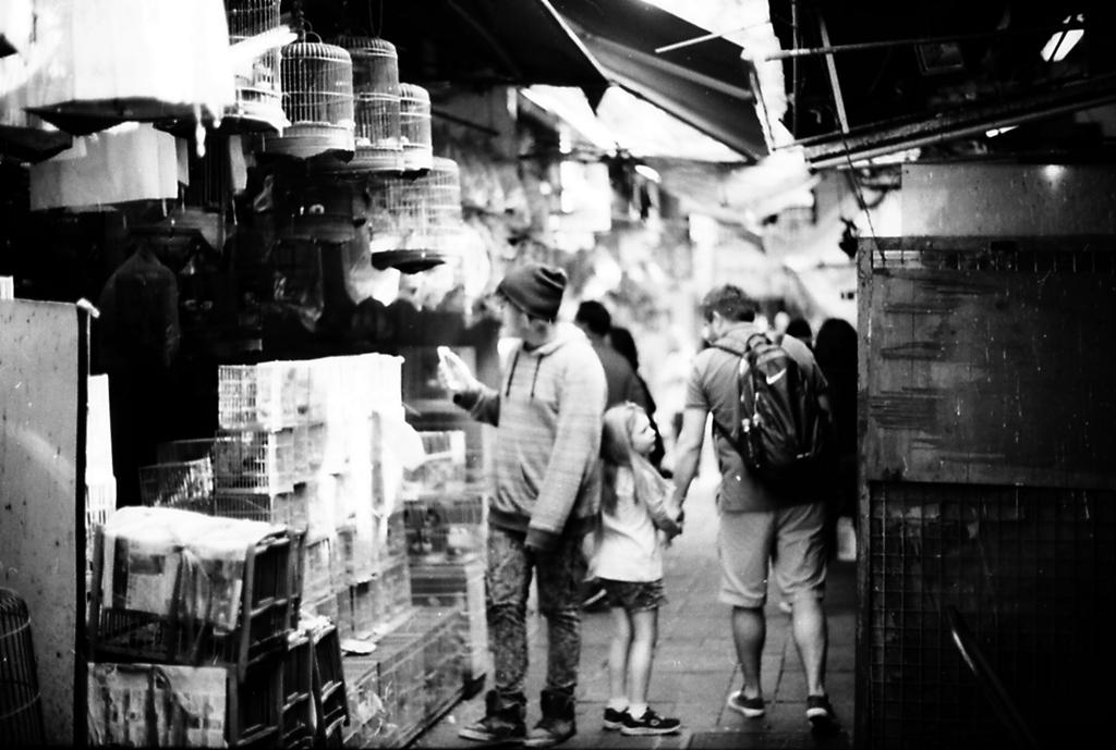 香港 バードガーデン3