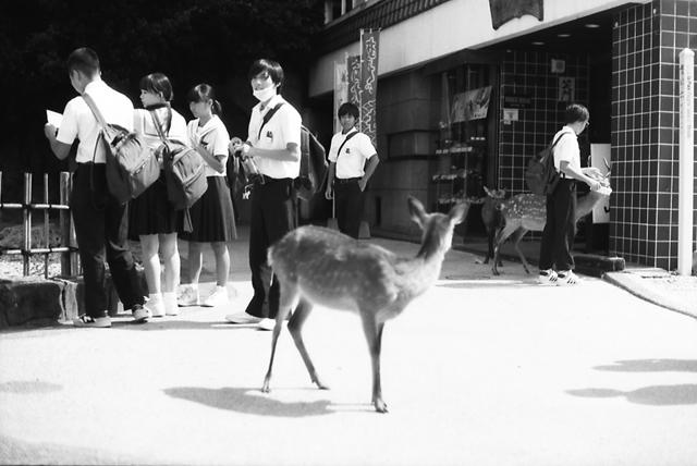 鹿と修学旅行生