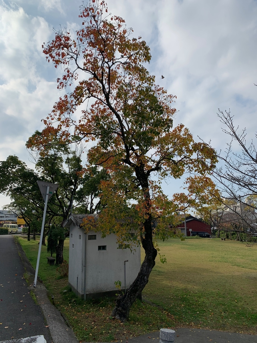 f:id:hamajaya_ken:20191126232000j:plain