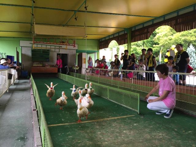 f:id:hamalogchan:20170729203038j:plain