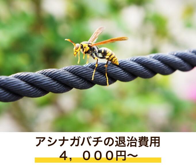 f:id:hamamatsu-hachikuzyo:20190702203510j:plain
