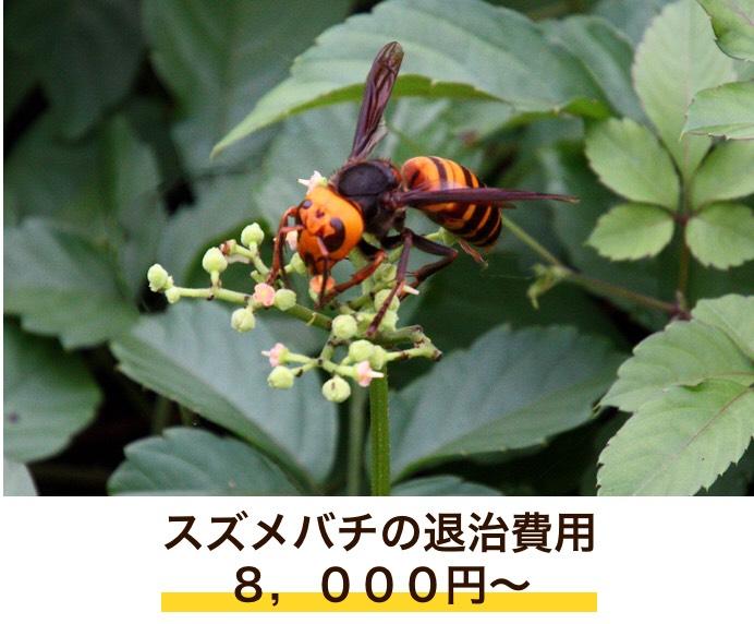 f:id:hamamatsu-hachikuzyo:20190702203806j:plain