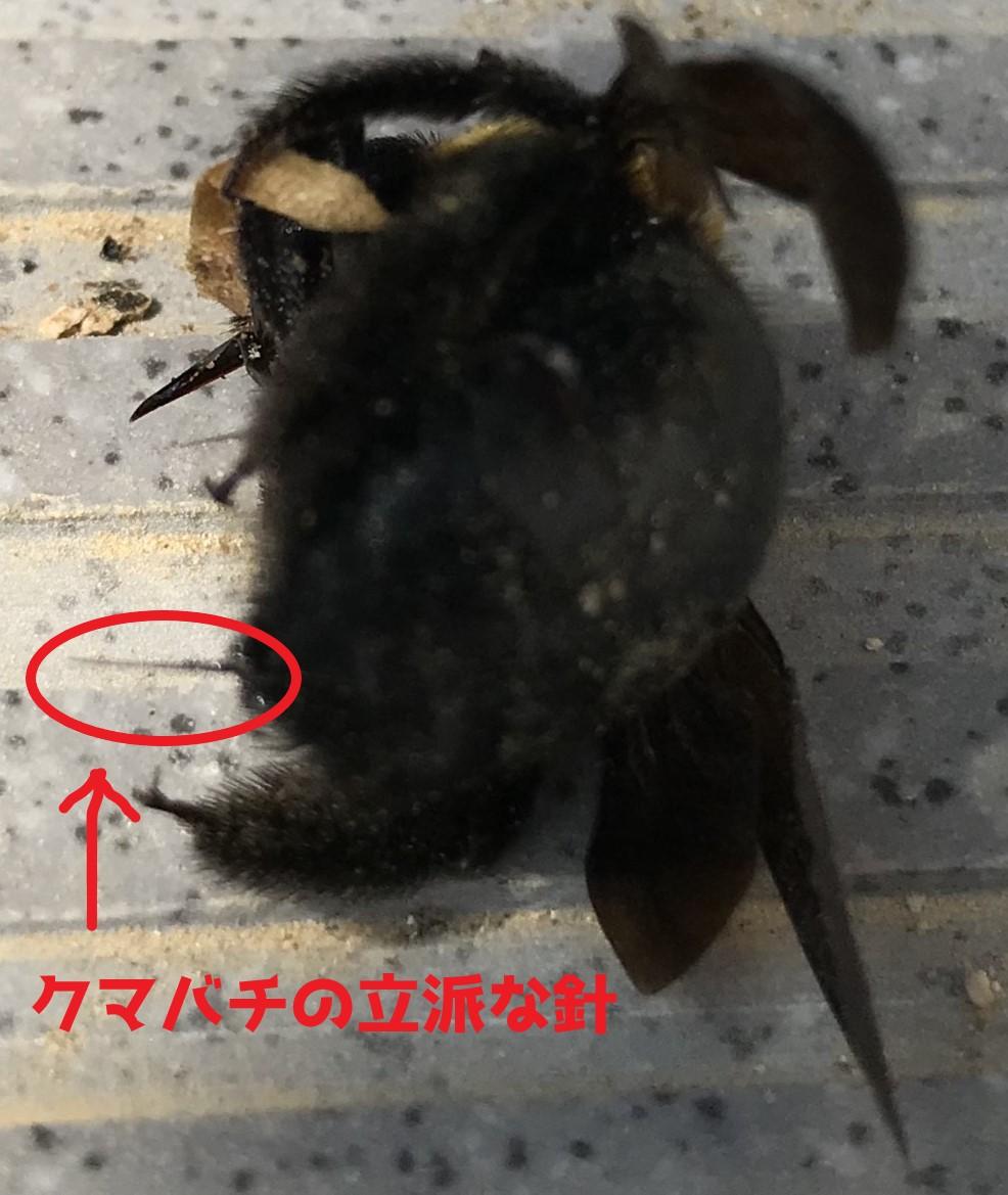 f:id:hamamatsu-hachikuzyo:20200609221835j:plain