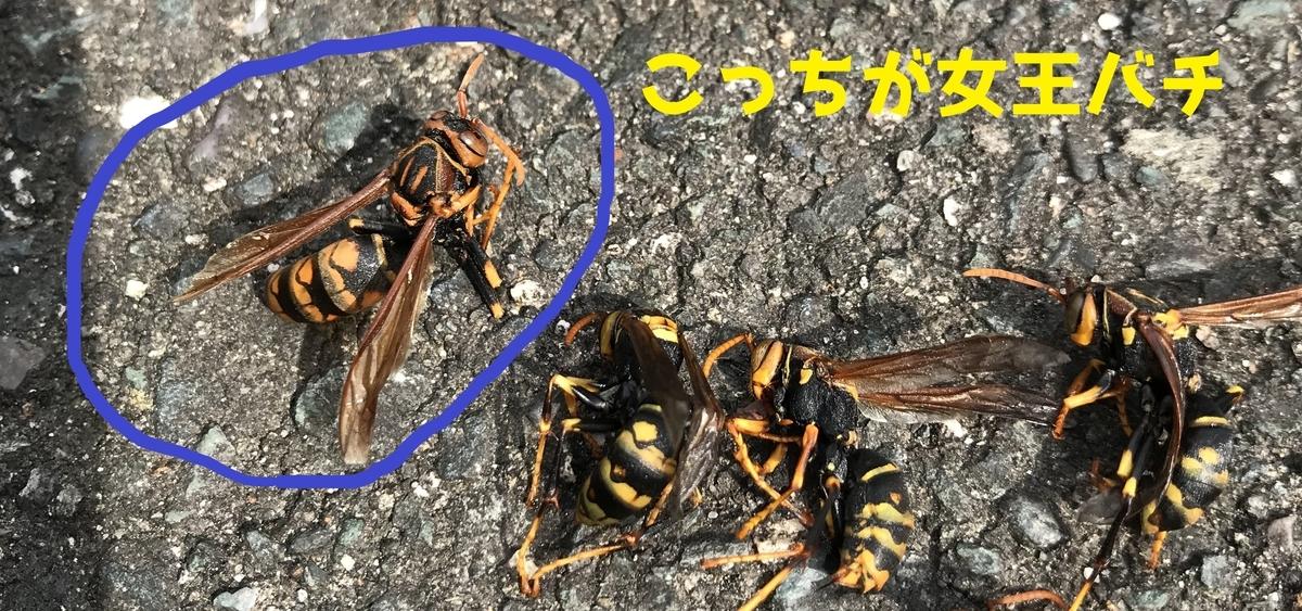 f:id:hamamatsu-hachikuzyo:20200618105955j:plain
