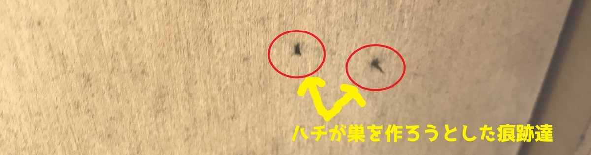 f:id:hamamatsu-hachikuzyo:20200622085556j:plain