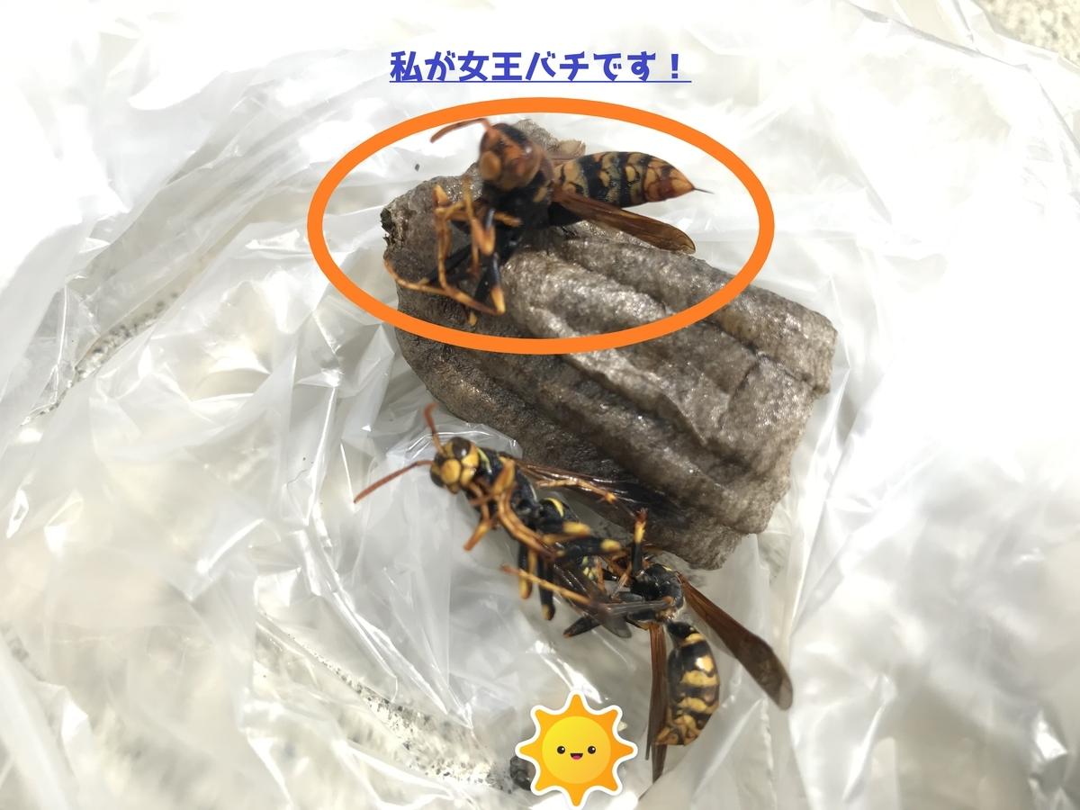f:id:hamamatsu-hachikuzyo:20200622100227j:plain