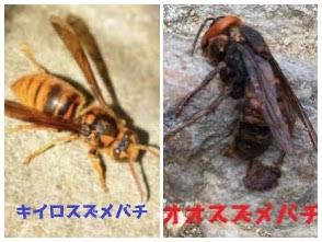 f:id:hamamatsu-hachikuzyo:20200629101849j:plain