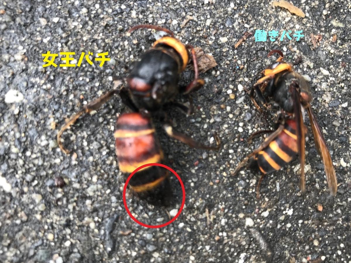 f:id:hamamatsu-hachikuzyo:20200727103231j:plain