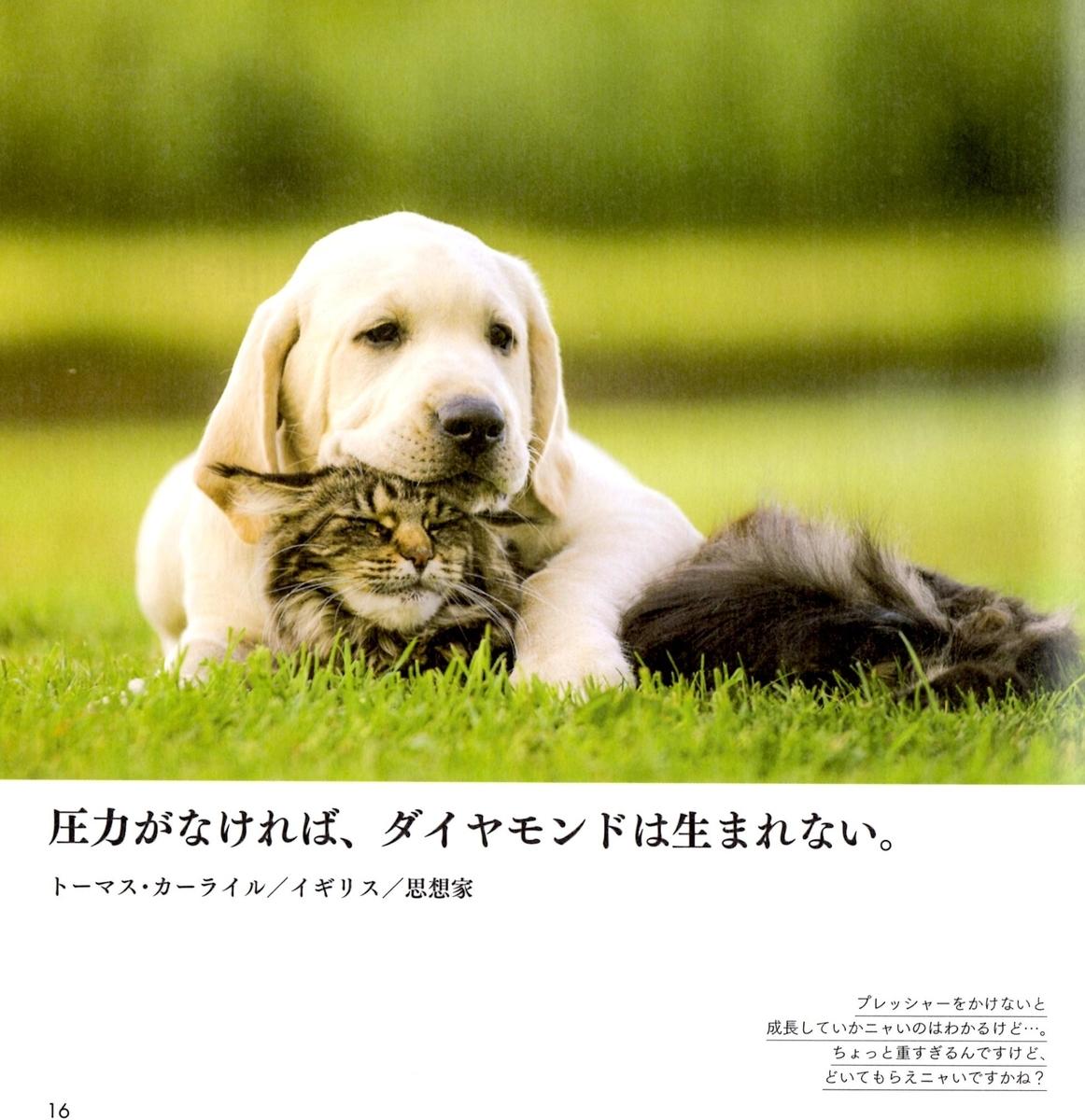f:id:hamasansu:20190620002205j:plain