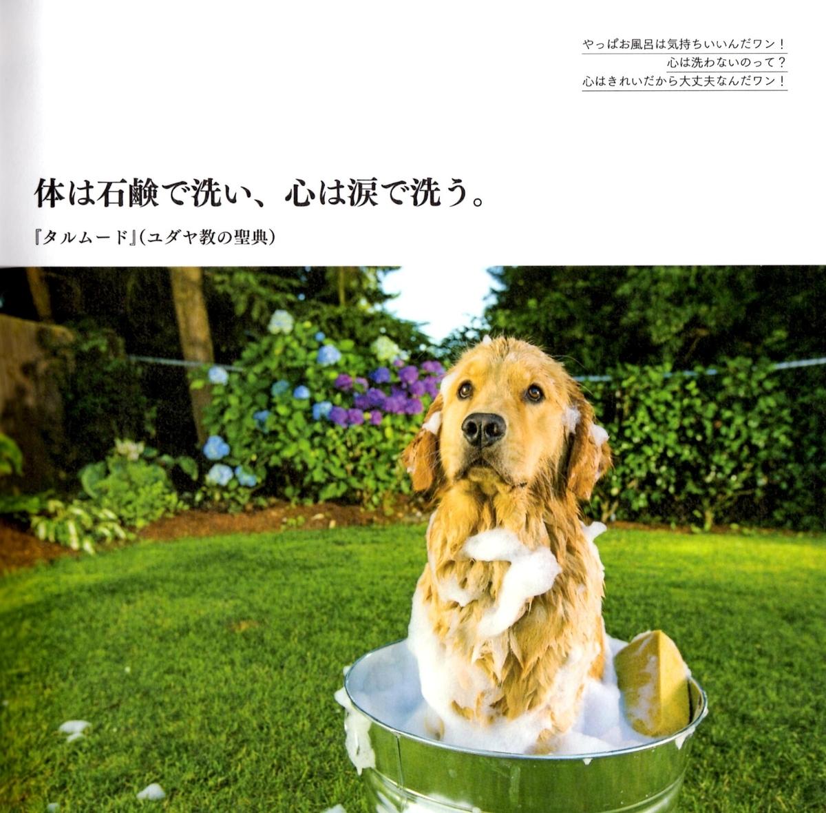 f:id:hamasansu:20190620002340j:plain