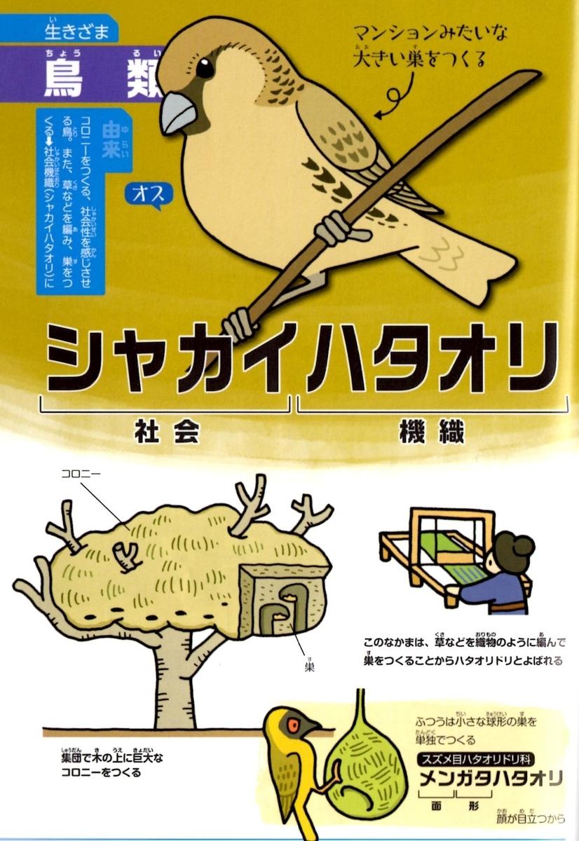 f:id:hamasansu:20191016235409j:plain