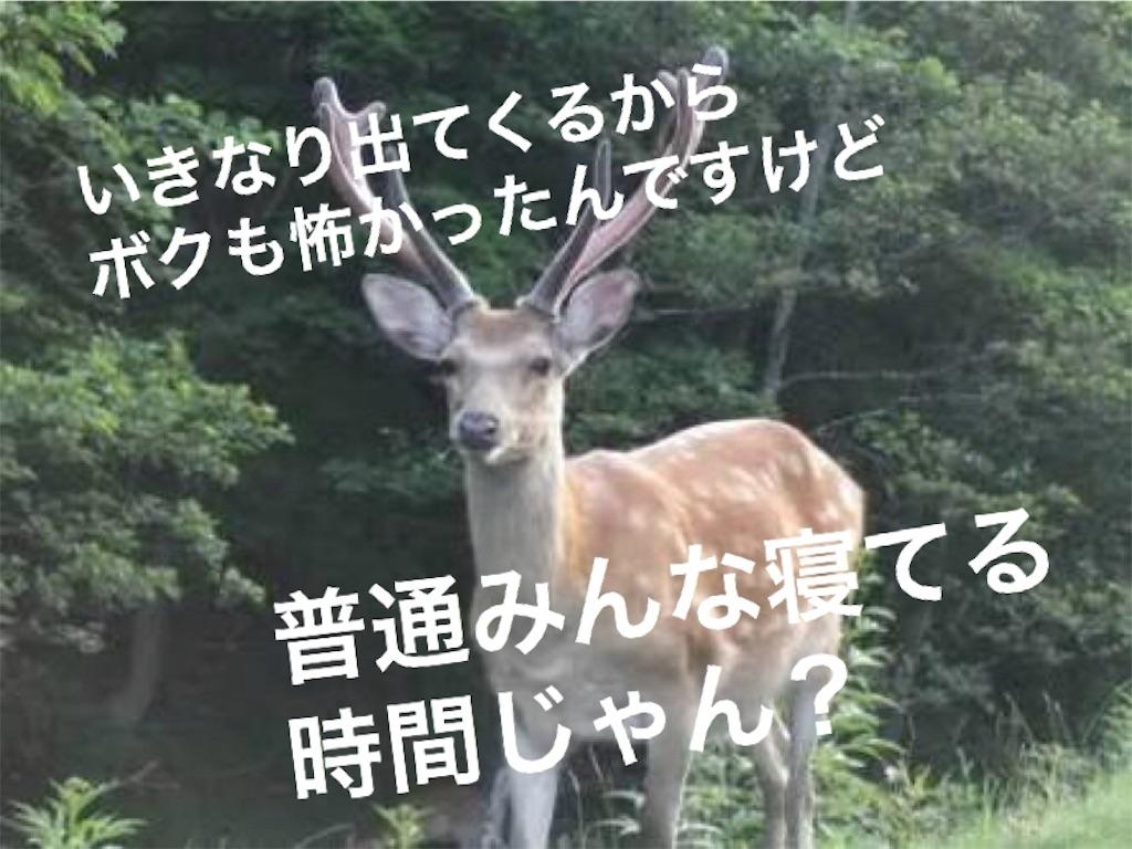 f:id:hamatimaruisaki:20180729165956j:image