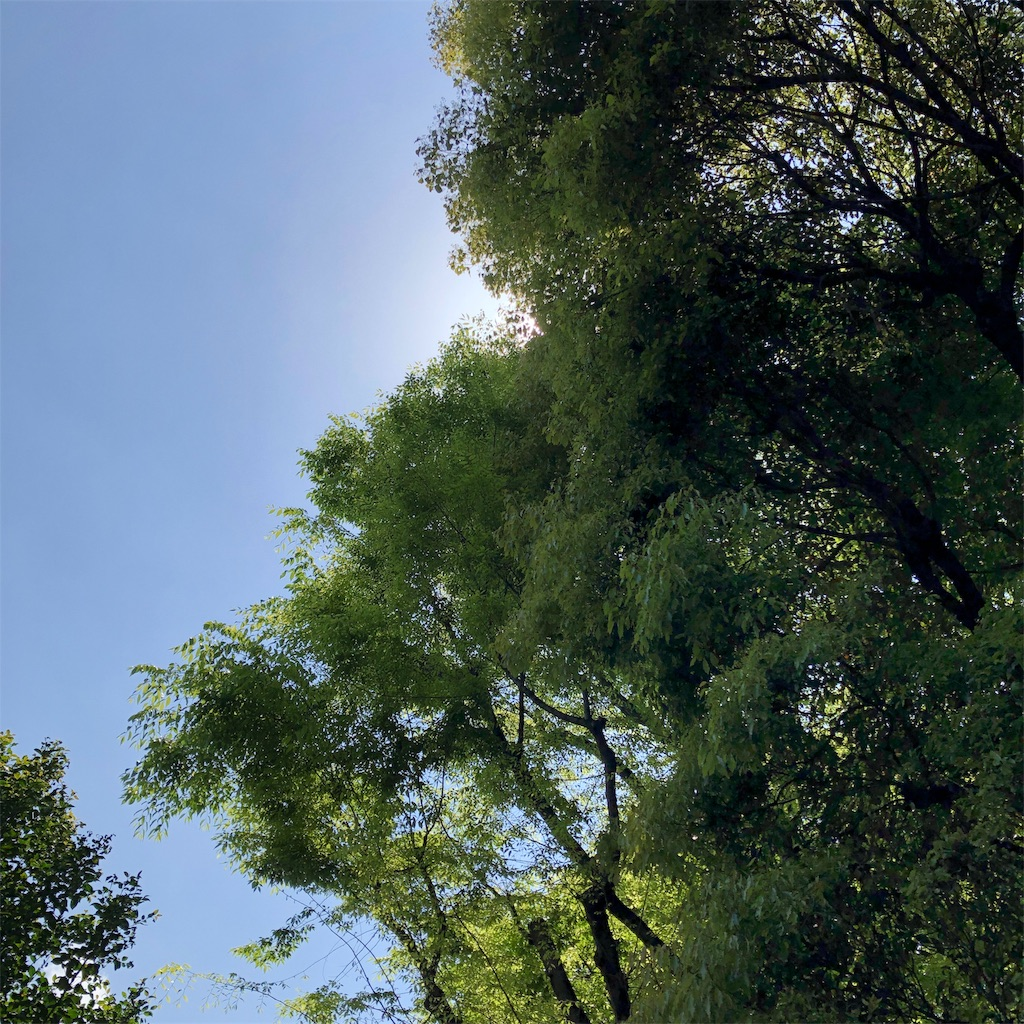 f:id:hammerklavier:20190503145724j:image