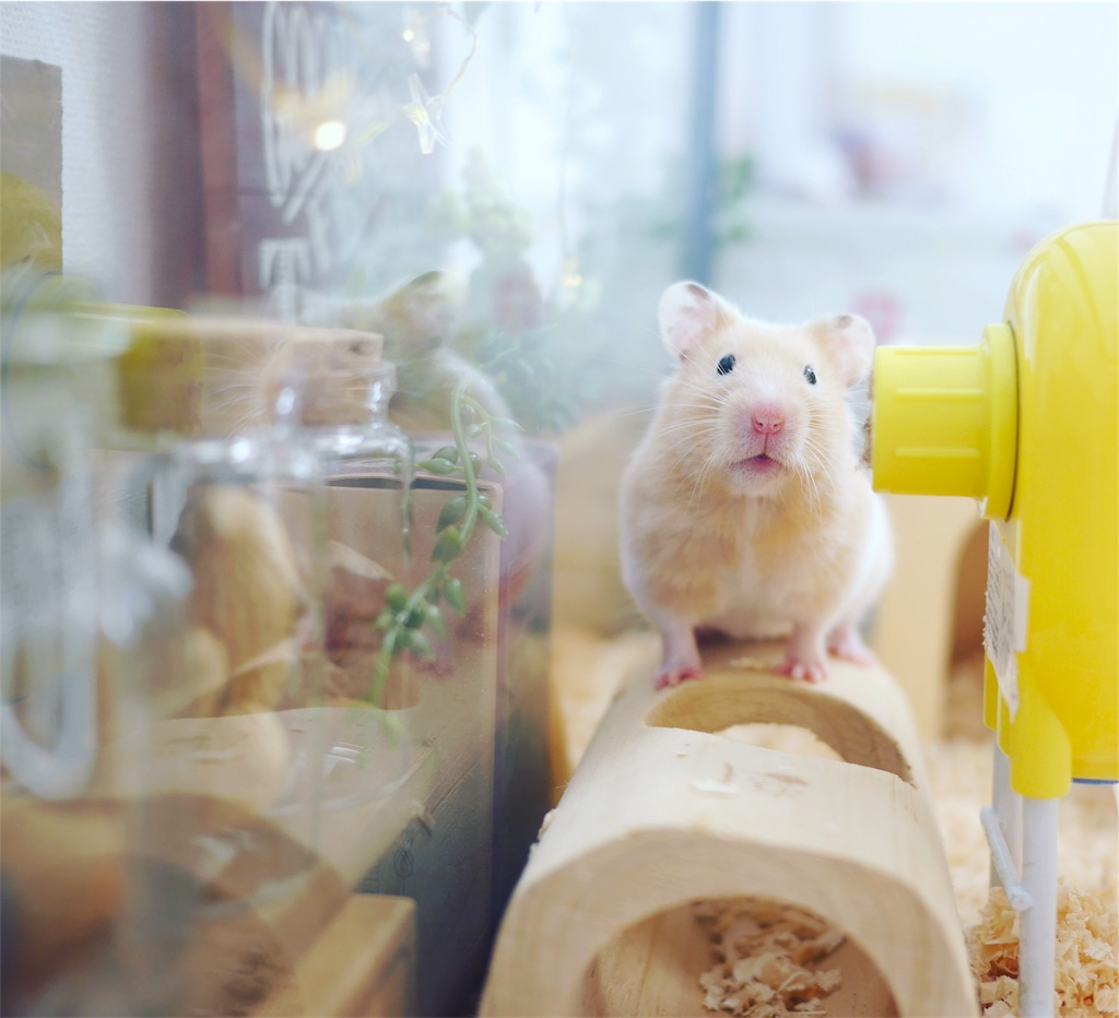 f:id:hamster_nappa:20170221174512j:image