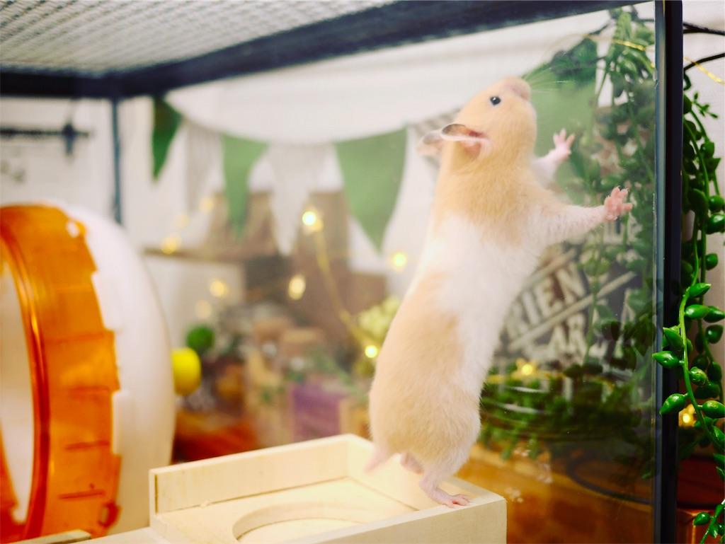 f:id:hamster_nappa:20170221193305j:image